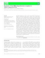 Báo cáo khoa học: Analysis of the RNA degradosome complex in Vibrio angustum S14 potx