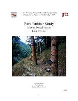 Para Rubber Study Hevea brasiliensis Lao P.D.R. pptx