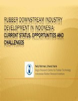 RUBBER DOWNSTREAM INDUSTRY DEVELOPMENT IN INDONESIA: CURRENT STATUS, OPPORTUNITIES AND CHALLENGES potx