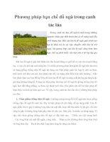 Phương pháp hạn chế đổ ngã trong canh tác lúa pptx