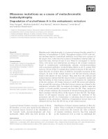 Báo cáo khoa học: Missense mutations as a cause of metachromatic leukodystrophy Degradation of arylsulfatase A in the endoplasmic reticulum potx