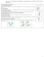 chủ đề 4. các dạng cân bằng.cân bằng của một vật có mặt chân đế