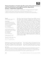 Báo cáo khoa học: Characterization of testis-specific serine–threonine kinase 3 and its activation by phosphoinositide-dependent kinase-1-dependent signalling doc