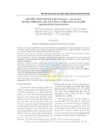 Nghiên cứu chuyển gen Chitinase - glucanase kháng nấm vào cây cà chua thông qua vi khuẩn Agrobacterium tumefaciens pdf