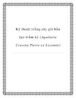Kỹ thuật trồng cây gió bầu tạo trầm kỳ (Aquilaria Crassna Pierre ex Lecomte) pdf