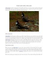 Cách nuôi chim chào mào pdf