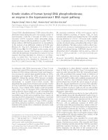 Báo cáo Y học: Kinetic studies of human tyrosyl-DNA phosphodiesterase, an enzyme in the topoisomerase I DNA repair pathway pot
