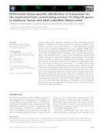 Báo cáo khoa học: Differential tissue-specific distribution of transcripts for the duplicated fatty acid-binding protein 10 (fabp10) genes in embryos, larvae and adult zebrafish (Danio rerio) docx