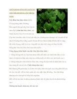 Chữa nóng sốt kém ăn trẻ bằng cây thuốc nam pdf
