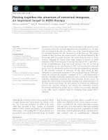 Báo cáo khoa học: Piecing together the structure of retroviral integrase, an important target in AIDS therapy pptx