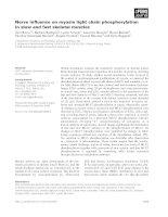 Báo cáo khoa học: Nerve influence on myosin light chain phosphorylation in slow and fast skeletal muscles pdf