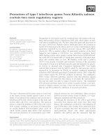 Báo cáo khoa học: Promoters of type I interferon genes from Atlantic salmon contain two main regulatory regions docx