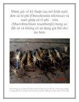 Đánh giá về kỹ thuật của mô hình nuôi đơn cá rô phi (Oreochromis niloticus) và nuôi ghép cá rô phi – tôm (Macrobrachium rosenbergii) trong ao đất có và không có sử dụng giá thể cho tảo bám pot