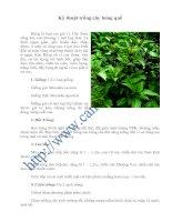 Kỹ thuật trồng cây húng quế pot