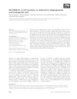 Báo cáo khoa học: SLC39A14, a LZT protein, is induced in adipogenesis and transports zinc pptx