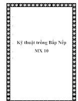 Kỹ thuật trồng Bắp Nếp MX 10 doc