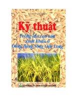 Kỹ thuật trồng lúa cao sản xuất khẩu ở Đồng bằng sông Cửu Long potx