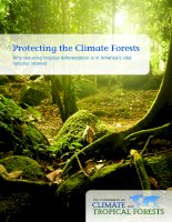Protecting The Climate Forests : Why Reducing Tropical Deforestation Is In Americażs Vital National Interest pptx