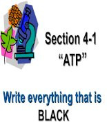 """Section 4-1 """" ATP """" write everything that is Black"""