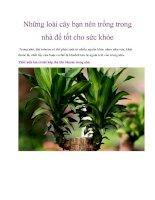 Những loài cây bạn nên trồng trong nhà để tốt cho sức khỏe pdf
