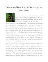 Phòng trừ ruồi đục lá và ruồi đục trái gây hại trên khổ qua potx