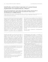 Báo cáo khoa học: Identification and functional expression of a second human b-galactoside a2,6-sialyltransferase, ST6Gal II docx