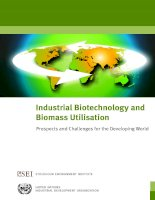 Industrial Biotechnology and Biomass Utilisation - Prospects and Challenges for the Developing World docx