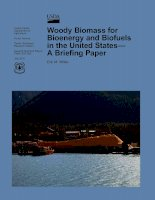 Woody Biomass for Bioenergy and Biofuels in the United States— A Briefing Paper doc