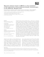 Báo cáo khoa học: Myocyte enhancer factor 2 (MEF2) is a key modulator of the expression of the prothoracicotropic hormone gene in the silkworm, Bombyx mori ppt