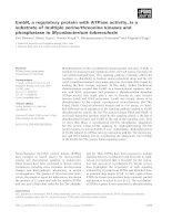 Báo cáo khoa học: EmbR, a regulatory protein with ATPase activity, is a substrate of multiple serine⁄threonine kinases and phosphatase in Mycobacterium tuberculosis doc