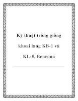 Kỹ thuật trồng giống khoai lang KB-1 và KL-5, Benrona ppt