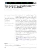 Báo cáo khoa học: Insulin like growth factor-1-induced phosphorylation and altered distribution of tuberous sclerosis complex (TSC)1⁄TSC2 in C2C12 myotubes pptx