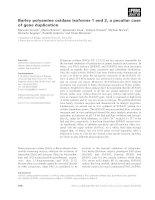 Báo cáo khoa học: Barley polyamine oxidase isoforms 1 and 2, a peculiar case of gene duplication docx