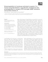 Báo cáo khoa học: Downregulation of protease-activated receptor-1 in human lung fibroblasts is specifically mediated by the prostaglandin E2 receptor EP2 through cAMP elevation and protein kinase A pot