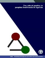 The role of poultry in peoples livelihoods in Uganda pot