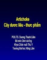 Artichoke: Cây dược liệu - thực phẩm pot