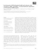 Báo cáo khoa học: Involvement of NF-jB subunit p65 and retinoic acid receptors, RARa and RXRa, in transcriptional regulation of the human GnRH II gene pot