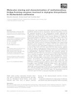Báo cáo khoa học: Molecular cloning and characterization of methylenedioxy bridge-forming enzymes involved in stylopine biosynthesis in Eschscholzia californica doc