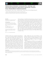 Báo cáo khoa học: Interactions between coenzyme B12 analogs and adenosylcobalamin-dependent glutamate mutase from Clostridium tetanomorphum pot