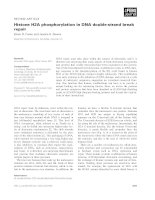 Báo cáo khoa học: Histone H2A phosphorylation in DNA double-strand break repair pot