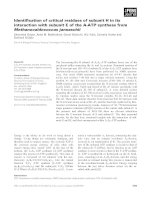 Báo cáo khoa học: Identification of critical residues of subunit H in its interaction with subunit E of the A-ATP synthase from Methanocaldococcus jannaschii potx
