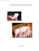 kỹ thuật chăn nuôi lợn nái sinh sản