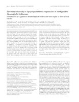 Báo cáo khoa học: Structural diversity in lipopolysaccharide expression in nontypeable Haemophilus influenzae Identification of L-glycero -D-manno-heptose in the outer-core region in three clinical isolates potx