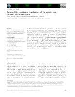 Báo cáo khoa học: Calmodulin-mediated regulation of the epidermal growth factor receptor doc