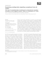 Báo cáo khoa học: Examining multiprotein signaling complexes from all angles The use of complementary techniques to characterize complex formation at the adapter protein, linker for activation of T cells pdf
