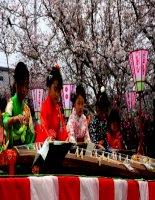 bộ sưu tập hình ảnh lễ hội hoa anh đào ở nhật bản