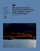 woody biomass for bioenergy and biofuels in the united states a briefing paper pdf
