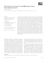 Báo cáo khoa học: New human and mouse microRNA genes found by homology search pptx