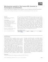 Báo cáo khoa học: Biochemical analysis of the human EVL domains in homologous recombination doc