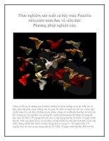 Thực nghiệm sản xuất cá bảy màu Poecilia reticulate toàn đực và siêu đực Phương pháp nghiên cứu pdf